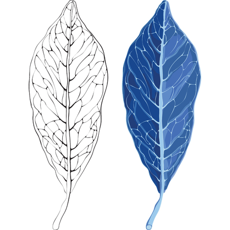 workpiece: Leaves in the frost vector illustration. Leaves in the frost and the silhouette of the veins on a leaf. Template for your design. Illustration