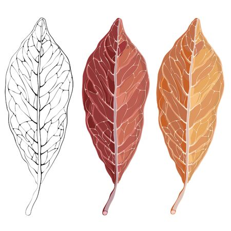 workpiece: Vector set of autumn leaf drawings and black-and-white version with streaks. Help your design.