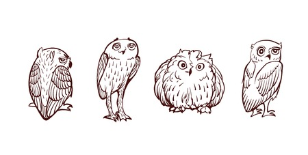 athene: Funny cartoon little owls set  Illustration