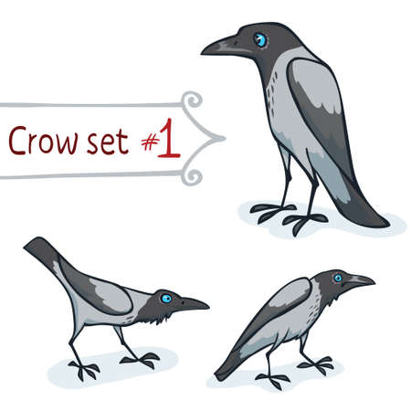 hooded: Hooded crow character design set number 1  Vector illustration Illustration