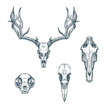 calavera: Cráneos animales conjunto aislado sobre fondo blanco. Deer, caballo, gato, cuervo. Ilustración vectorial, EPS 10. Contiene objetos transparentes