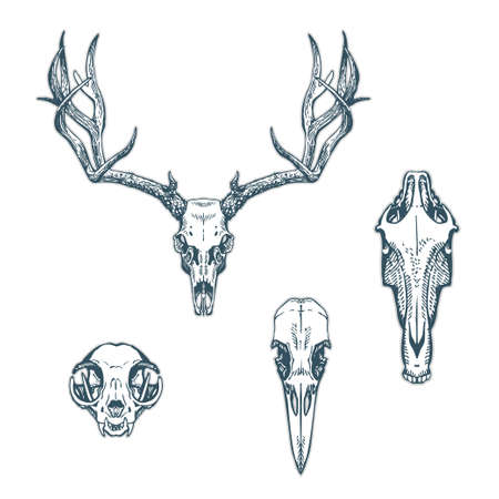 Animal skulls set isolated on white background. Deer, horse, cat, crow. Vector illustration, EPS 10. Contains transparent objects Illustration