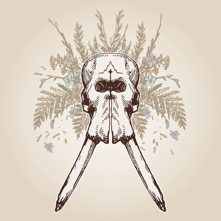 plumage: Elephant skull on a plumage background. Contains transparent objects
