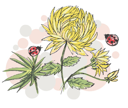 Vector sketch with yellow chrysanthemums and ladybirds. Vector illustration 向量圖像