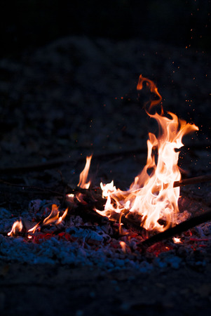 ardently: bonfire night in the woods Stock Photo