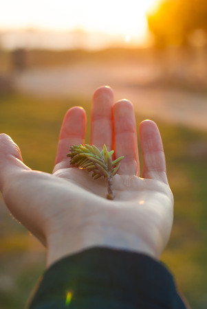 Spring blade of grass on the palm in the rays of the setting sun photo
