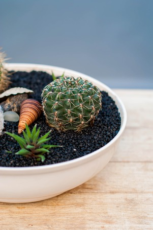 Succulents and cacti in a white flowerpot on a black ground. Indoor plants succulents on the rough wooden background.