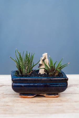 Several succulents in pots. Potted plants on a wooden table. Stock Photo