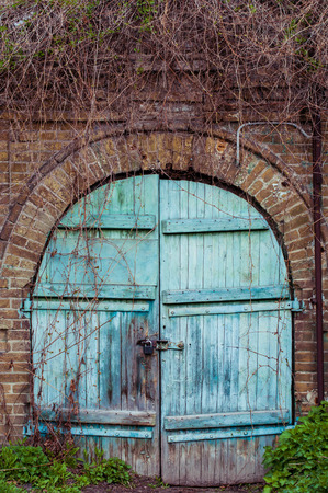 Blue wooden door as background. The old door in the brick wall. A rough door with an old lock. Brick wall with a door, twined with ivy.