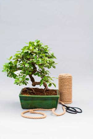 明るい灰色の背景にセラミック鍋に盆栽。土鍋・工具盆栽。明るい灰色の背景に盆栽。灰色の背景上に鍋で自家製工場。