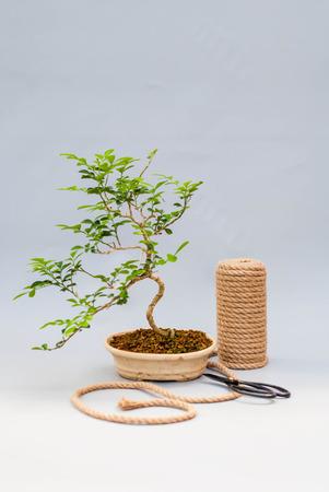 明るい灰色の背景に盆栽。はさみと糸で盆栽。灰色の背景に自家製工場。 写真素材