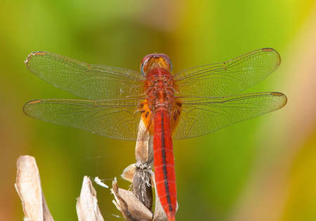 compound eyes: Dragonfly on perch