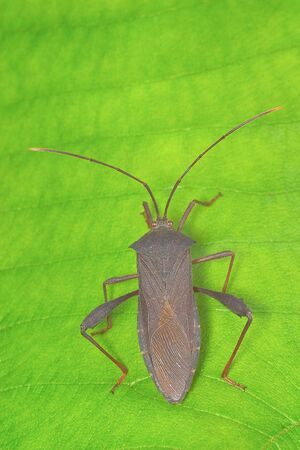 Gray Bug on Green Leaf background photo