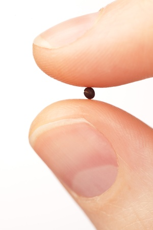 fingertip: Macro image of fingers holding a mustard seed. The mustard seed is often seen as a symbol of faith and belief because of various biblical passages.