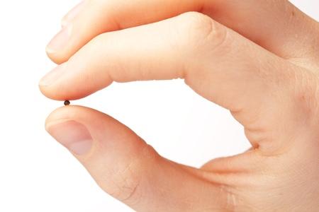 semilla: Macro imagen de una mano femenina sosteniendo una semilla de mostaza. La semilla de mostaza es a menudo visto como un símbolo de la fe y la creencia por varios pasajes bíblicos. Foto de archivo