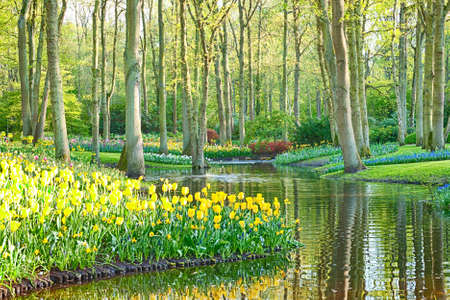Romantic tulip garden with a water canal and trees, photographed on a late sunny afternoon.