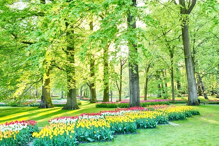 A nicely arranged Dutch outdoor park or a garden with blooming tulip flowerbeds and trees.