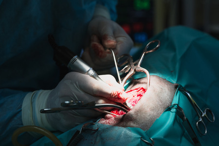 herniated: Veterinary surgeon removes a herniated disc of a dog at a vet clinic.