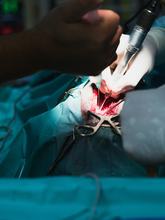 herniated: Surgeon removes a herniated disc of a dog at a vet clinic. Stock Photo