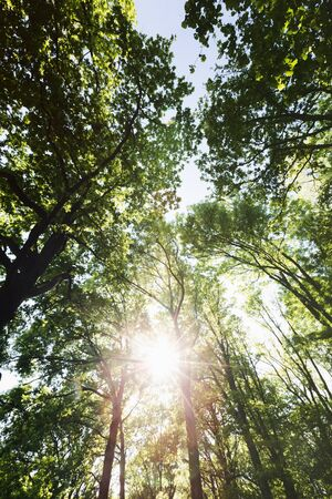 A spring or summer scene from a forest or a park - sunlight shining through branches. Stockfoto