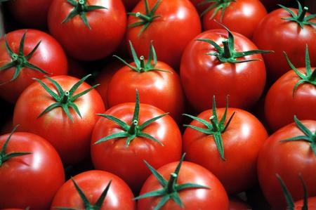 fresh tomatoes Stock Photo - 10880430