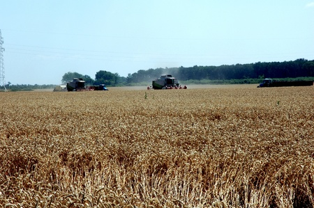 combine harvester in field wheat 2 photo