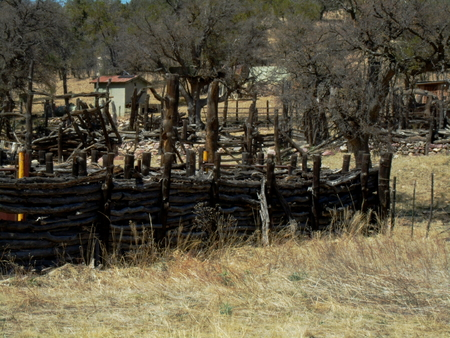 Fence of small logs built to keep Bulls in  Very tight fence  Old