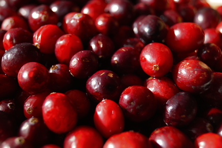 rosy cheeked: Superfood cranberries are native to North America