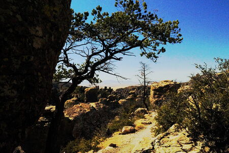 timberland:  40 Chiricahua National Monument  A  Wonderland of Rocks  mountain range  Called the  Land of the Standing-Up Rocks  by the Chiricahua Apaches Stock Photo