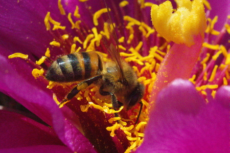anthers: 251 Cactus Flower Buckhorn