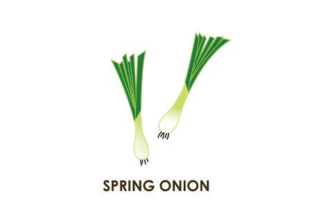 Spring onion Illustration