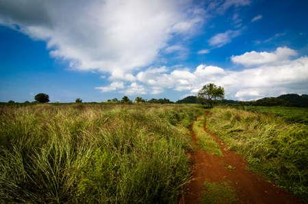 weald: Grass and sky