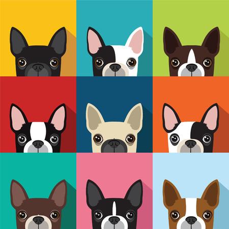 boston terrier pattern,vector full color