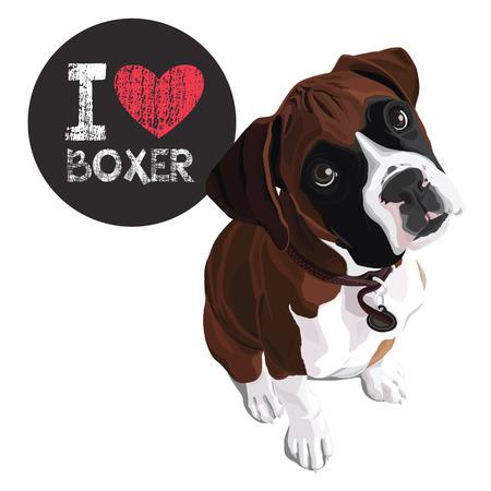 Vettore ritratto del primo piano del cane domestico Boxer razza Archivio Fotografico - 53612458