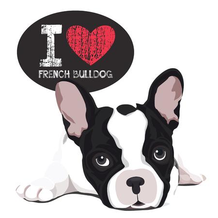 bulldog: Vector el retrato del primer del perro doméstico Bulldog francés raza