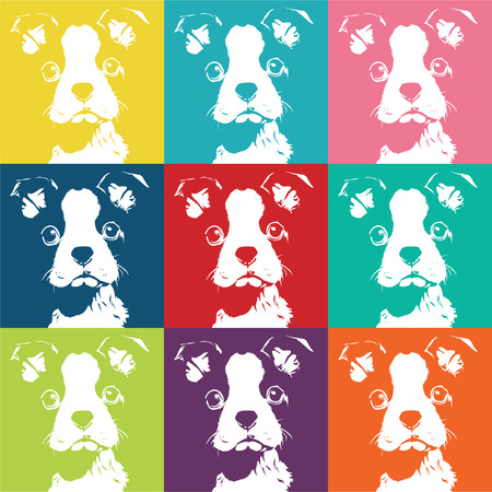 boston terrier: boston terrier Color pattern  illustration