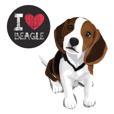 vector closeup portrait of the domestic dog beagle breed Illustration