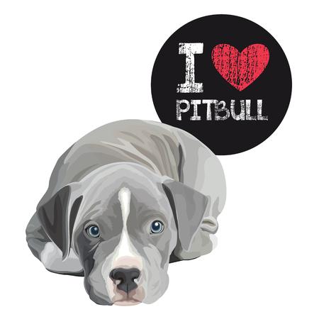 Closeup portrait of the domestic dog pitbull terrior breed