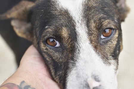 Closeup dog face Stock Photo