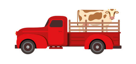 Cow Transportation flat vector illustration. Farm livestock animals moving. Cattle relocation with a red pick up truck.