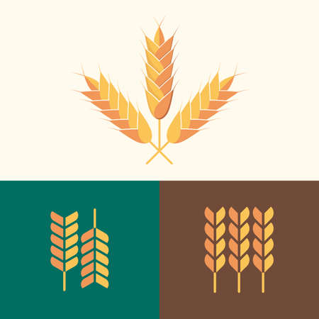 Set of vector flat design wheat, design template for organic agricultural products, harvest, grain, bakery, healthy food. 3 style variations.