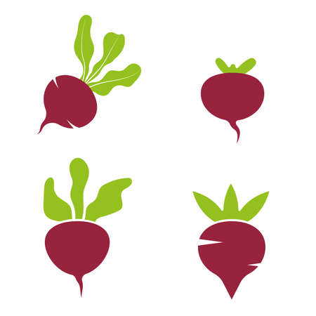 Beet vector illustration. Isolated vegetables on white background Illustration