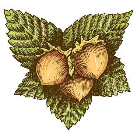 albero nocciola: Tre nocciola Vettoriali