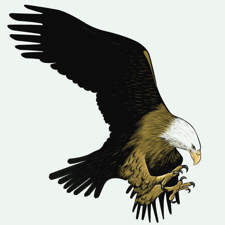 the claws: bald eagle