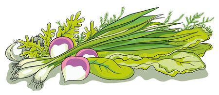 chive: vector illustration. Vegetarian food-Greens for salad and garlic Illustration