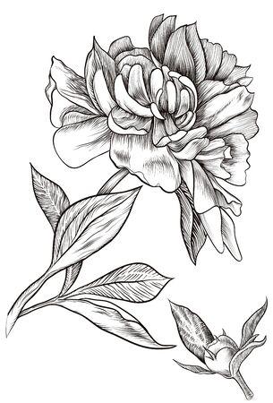 Vector illustration. Design element. Outline drawing of a flower