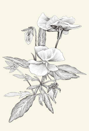 flowering plants: illustration Beauty in nature Flowering plants. Illustration