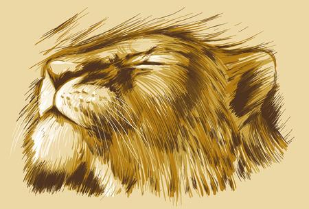 lion dessin: BIG CATS. Collection d'une main tirée illustrations originaux, pas de traçage. Dessins sont modifiables dans les couches et les groupes. Les couches de couleur sont séparés.
