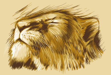 line drawing: BIG CATS. Collection of an hand drawn illustrations originals, no tracing. Drawings are editable in layers and groups. The color layers are separated.
