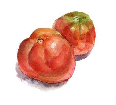 Two red tomatoes 版權商用圖片